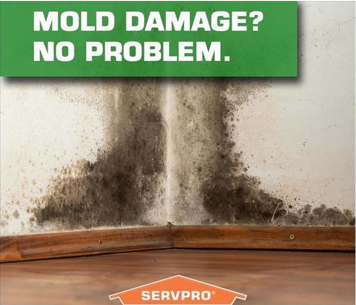 Mold Remediation Mold Removal vs. Mold Remediation